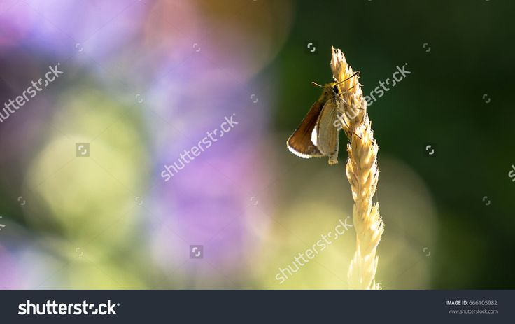 Butterfly on the end of the grass with beautiful background