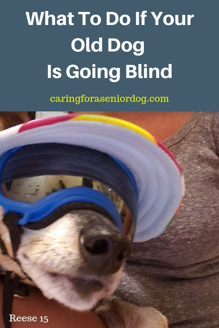 What To Do If Your Old Dog Is Going Blind Blind Dog Going Blind Dog Care