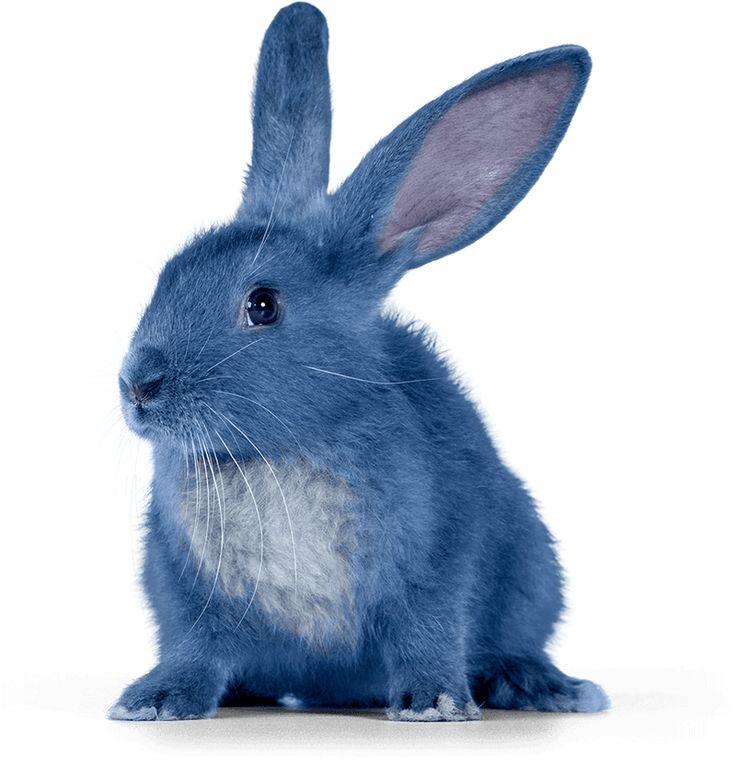 Head Bunny At Blue Bunny Ice Cream Company