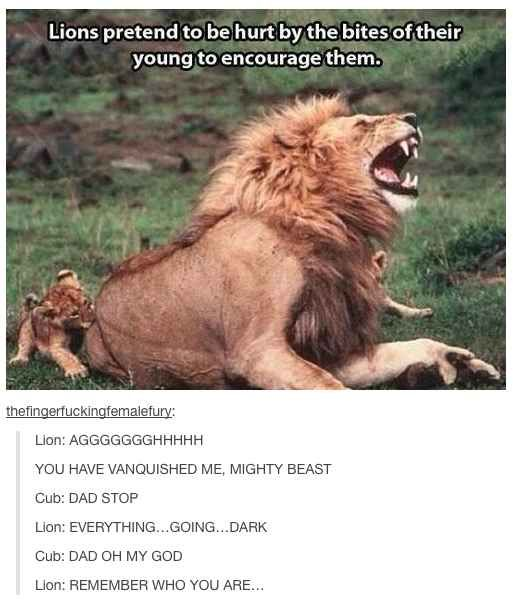 48 Times Tumblr Was Funny About Animals...if this is true....SQUEE