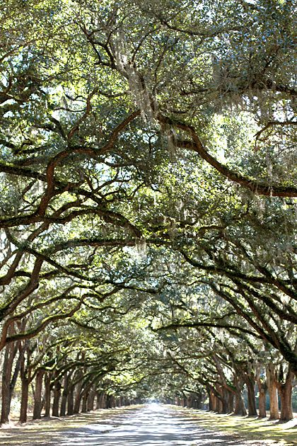 Wormsloe is one of my favorite places in Savannah, and we had INCREDIBLY GORGEOUS bridal photos taken along this Live Oak tree-lined drive! LOVE IT!