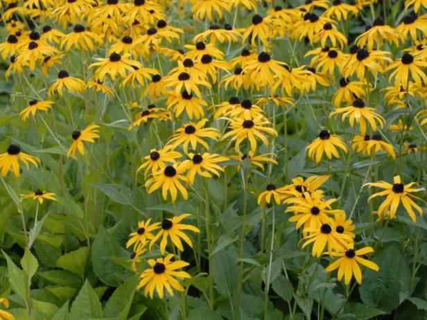 12 best images about zig 39 s garden on pinterest gardens for Low maintenance full sun flowers