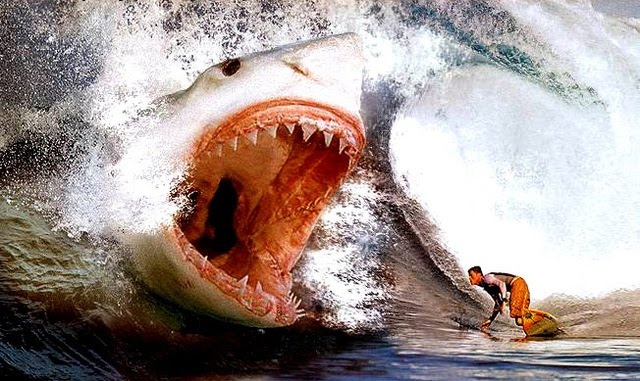 16 best Fish that are big images on Pinterest | Megalodon shark, Shark week and Sharks