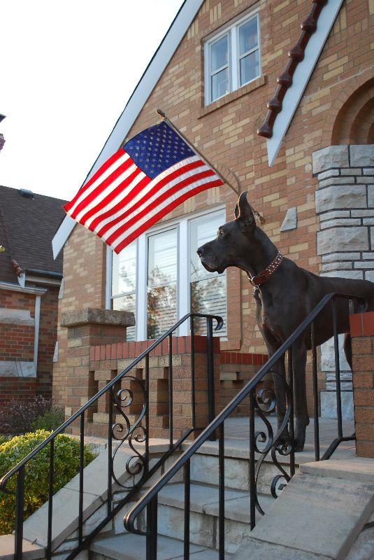 Waylon modeling the American flag!