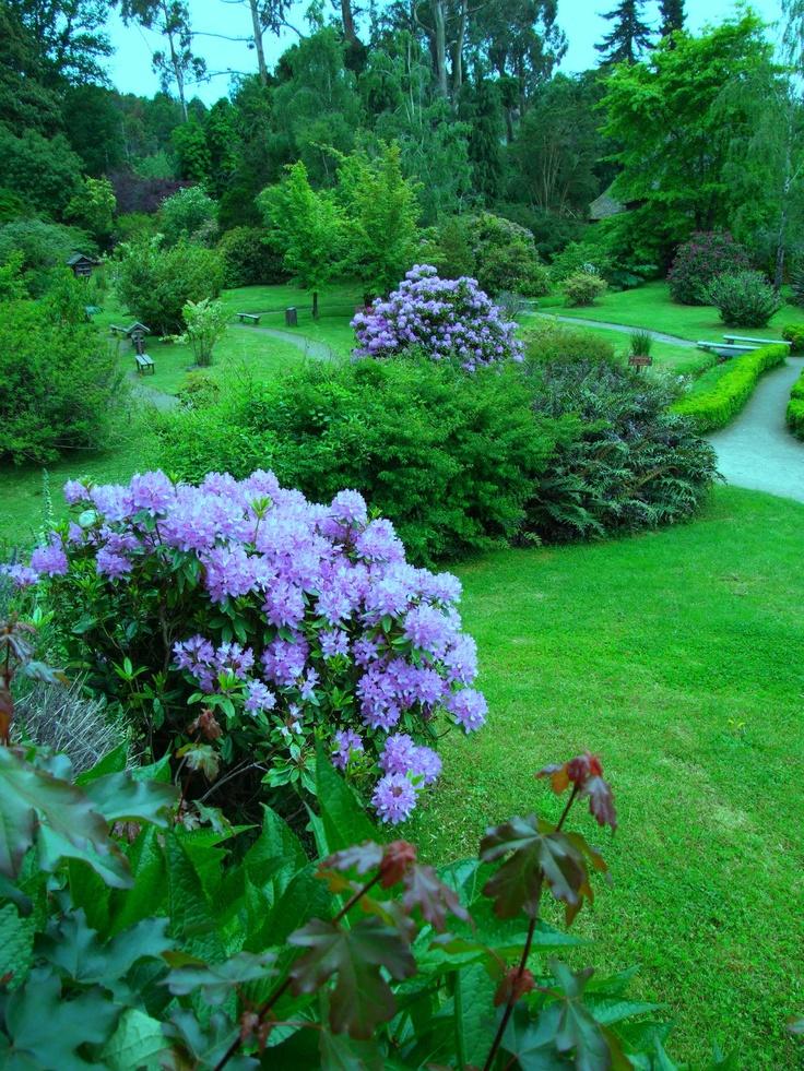22 mejores im genes de flores y arbustos en pinterest