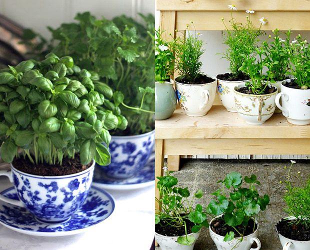 Aprenda a fazer uma mini horta! Elas são uma ótima forma de melhorar os seus hábitos alimentares, além de trazerem mais vida para dentro da sua casa.: