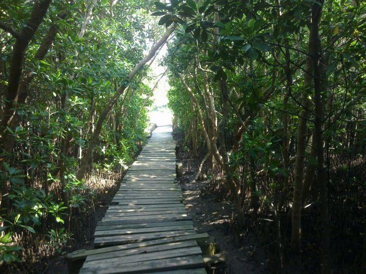 Beachwood Mangroves Durban