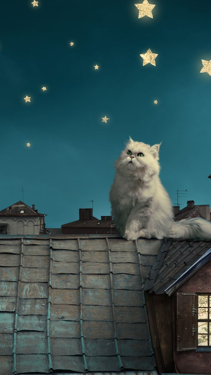 White Persian Cat Kitten Fairy Tale Fantasy Roofs Houses Sky Night Stars Moon #iPhone #6 #wallpaper