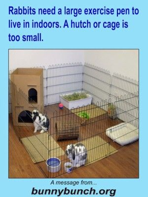Rabbits need a large exercise pen to live in indoors. A hutch or cage is too small.  --  Bunny Bunch SPCR