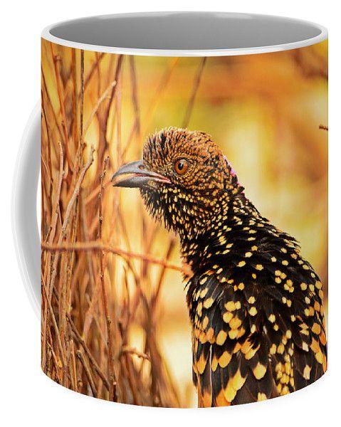 Bird Coffee Mug featuring the photograph Western Bowerbird by Racheal Christian - To buy visit http://racheal-christian.pixels.com/products/western-bowerbird-racheal-christian-coffee-mug.html