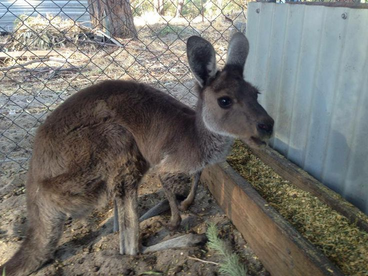 Mandurah Wildlife Rescue visits Mandjar Markets on a Sunday