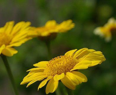 oktober verjaardag bloemen betekenis