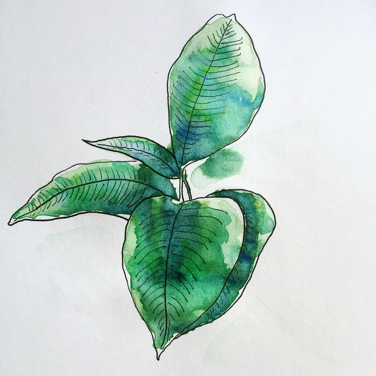 Plant doodles - watercolour and ink