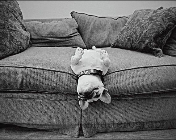 bulldog: Happy Baby, French Bulldogs Puppies, French Baby, The Edge, Cute Pet, Lazy Sunday, Baby Dogs, Naps Time, Sweet Dreams