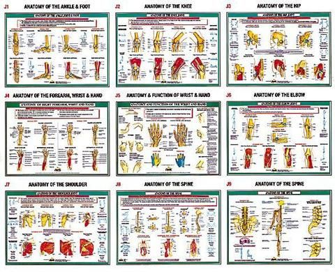 Best Anatomy  Medical Charts  Posters Images On