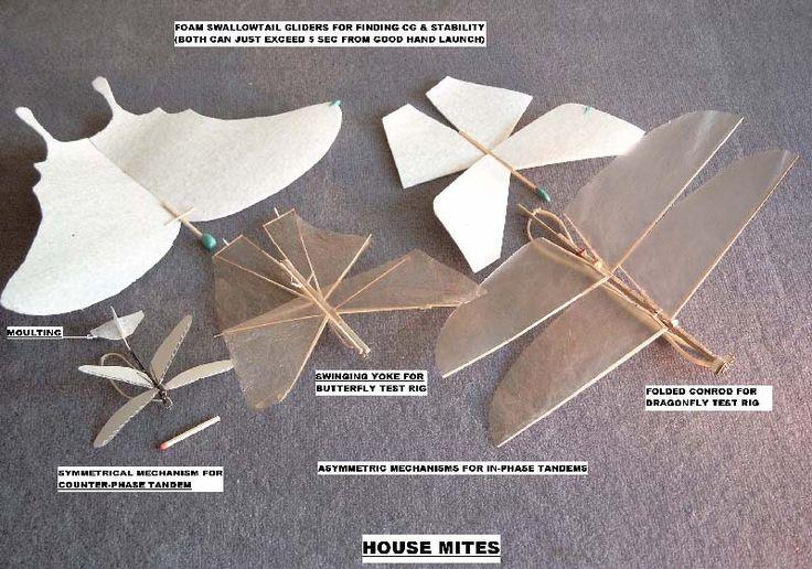 housemites.jpg 800×561 pixels