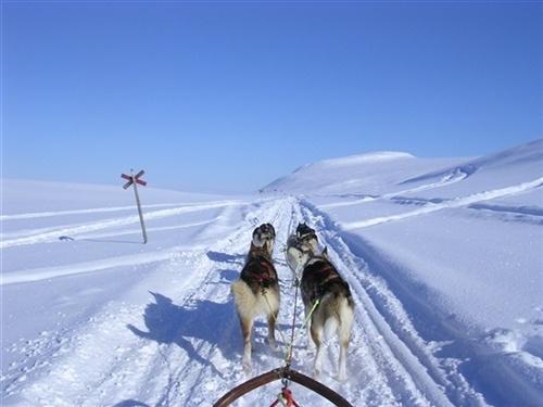 on the way back to Saltoluokta, by: Peter Rijs. Tags: #sledgedog #snow #winter