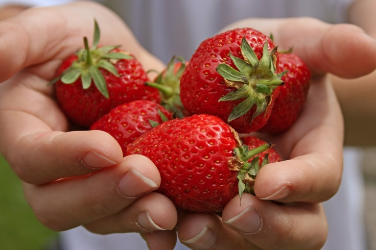 cupped hands: Fruit Pick, Families Fruit, Inspo Scultpur Ideas, Ideas Strawberries, Logos Ideas, Daughters Fav, Cups Hands, Food Photo, Strawberries Hands