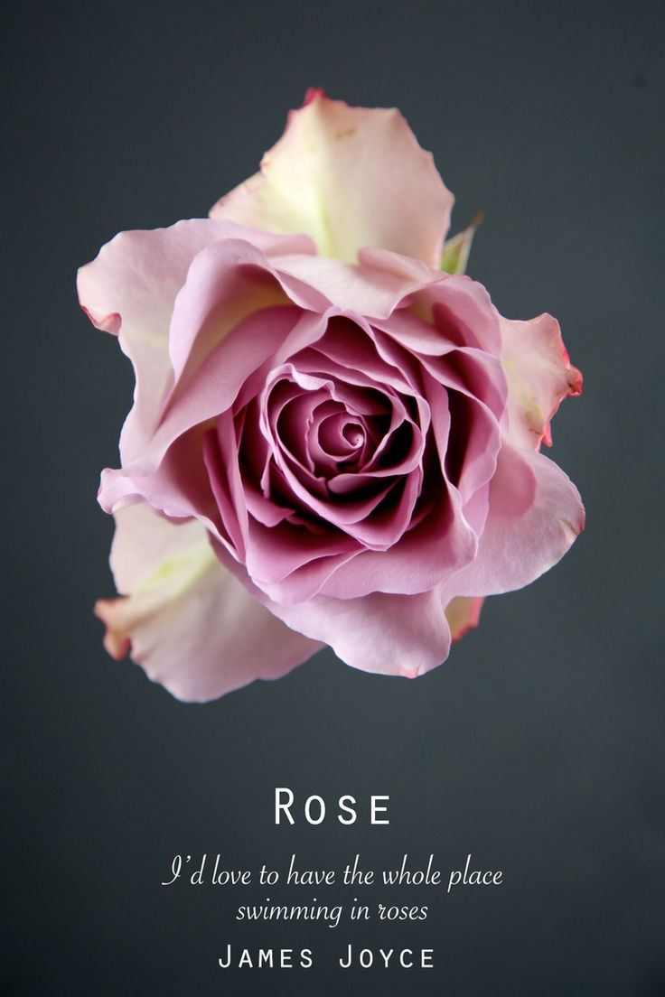 Rose quote free printable wall art