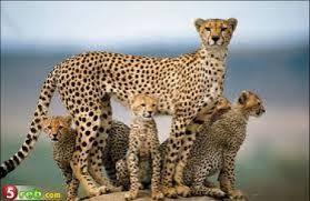 Výsledek obrázku pro divoká zvířata