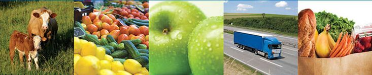 National Good Food Network banner image:                  photos of cows, organic produce, apples, semi truck,                  grocery bag