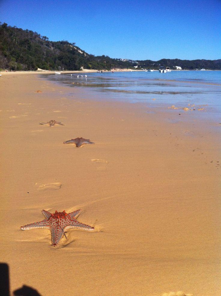 Starfish, Moreton Island Australia