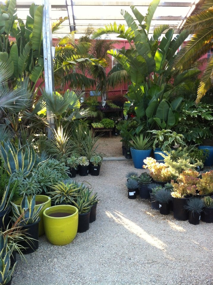 63 best images about plant nursery garden center on for Idea center dilshad garden