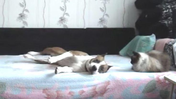 Als je een huisdier hebt dan heb je jezelf vast wel eens afgevraagd wat je huisdier doet als jij van huis bent. Het kan van alles zijn maar je kan het nooit zeker weten. Daarom besloot dit baasje om een verborgen camera neer te zetten in de kamer om te zien wat zijn hond uitspookt. …