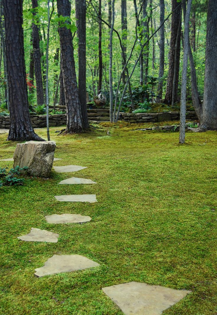 How To Grow Moss | Moss and Stone Gardens Blog