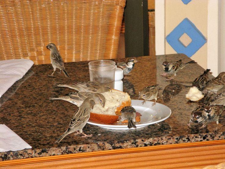 boavista-capo verde, ospiti a colazione