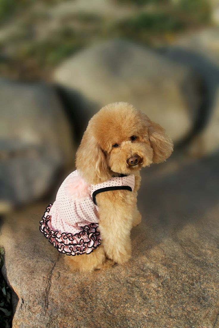Spotty Frilly Pink dress with Flower! http://edenpetz.co.uk/dogs/dogclothing/summerdresses/princesspolkadotsfrilldressmedium
