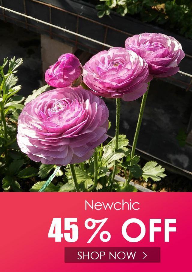Ranunculus Seeds Peonies In 2020 Flower Seeds Peonies And Hydrangeas Ranunculus