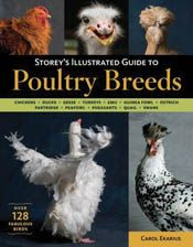 cover of Storey's Illustrated Guide to Poultry Breeds