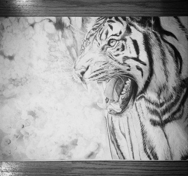 #draw #drawing #paint #painting #art #wild #animal #animals #tiger #pencil #paper #DeviantArt