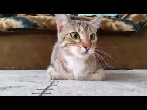 Кот смотрит фильм ужасов. Классная реакция кота