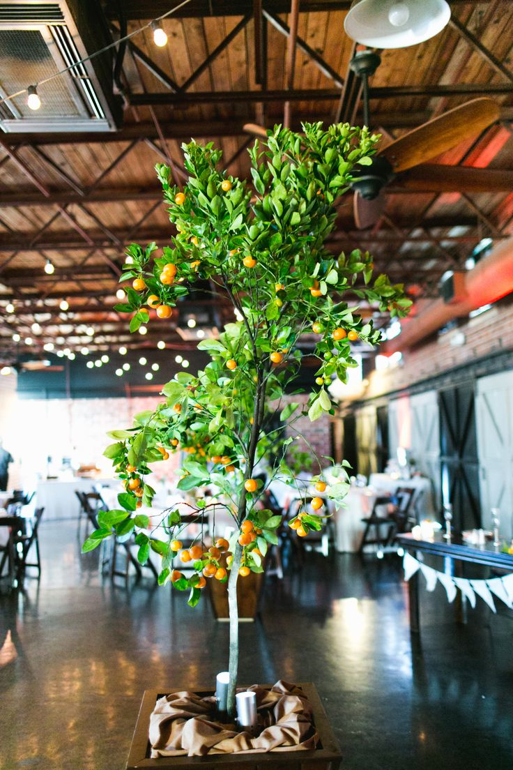 this vintage florida and citrus inspired wedding reception featured live kumquat trees set in varnished wood containers around the dance floor.