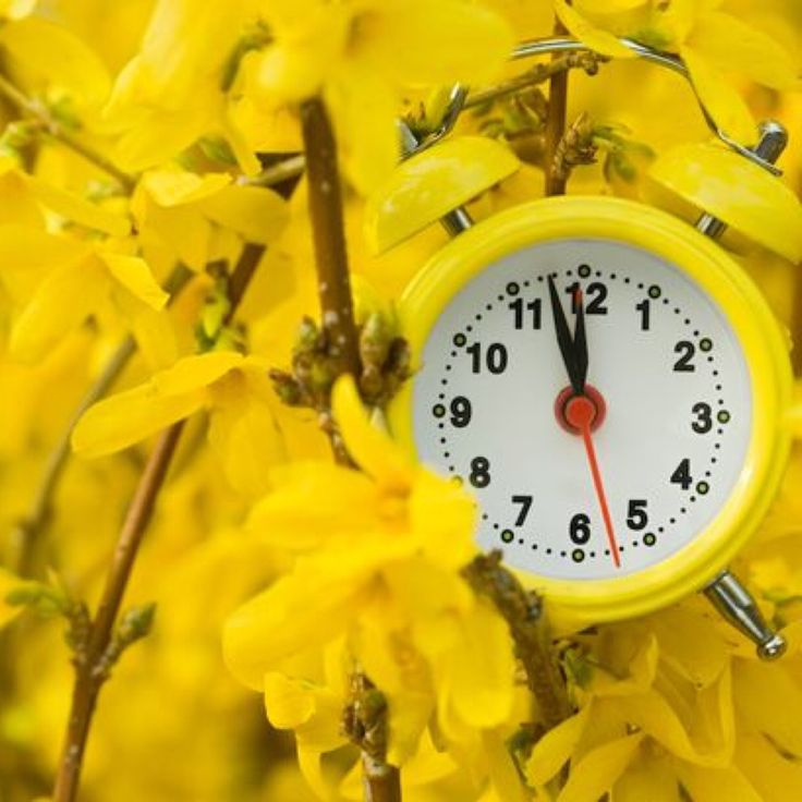 """Here's When Daylight Saving Time Begins  Get ready to spring those clocks forward. Daylight saving time begins on Sunday, March 13, 2016 at 2 a.m.  The time will """"spring forward"""" an hour, which means you'll be adding more daylight to your days -- but also losing a precious hour of sleep.  #DaylightSavingTime ##DaylightSaving #Spring #Clocks #Latham #Family #Reunion #LathamFamily #LathamReunion #LathamFamilyReunion"""