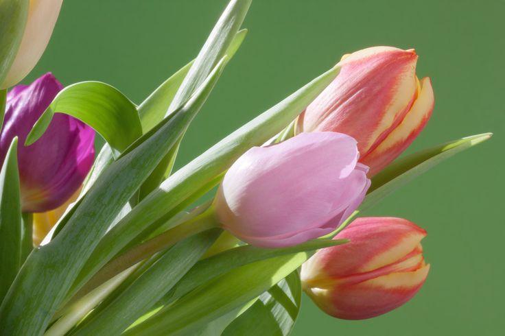 Tulpaner är alltid välkomna.
