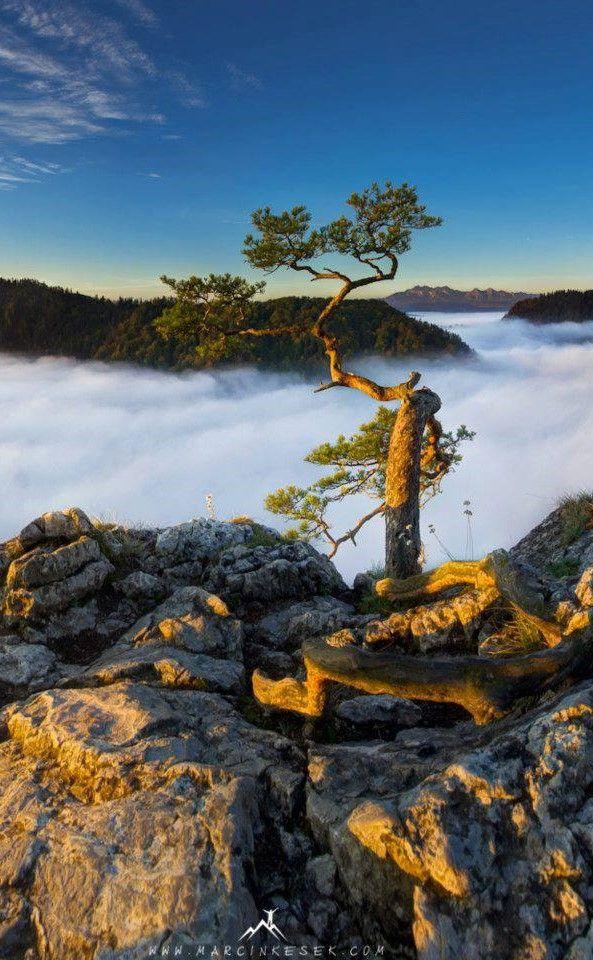 Pieniny National Park, Sokolica Mountain. Poland