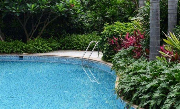 Best 25 Pool Landscaping Plants Ideas On Pinterest Pool