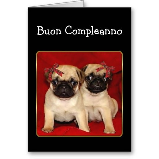 Buon compleanno Birthday Pugs greeting card