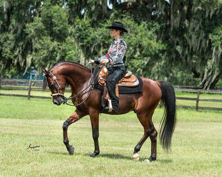 702 Best Images About Arabian Horses Under Saddle On