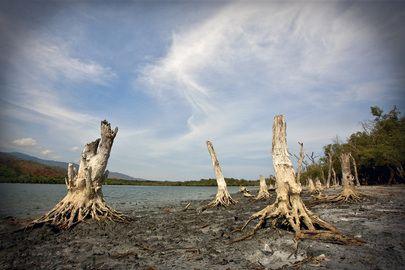De Intergouvernementele werkgroep inzake klimaatverandering (IPCC), het wetenschappelijk orgaan van de Verenigde Naties inzake klimaatverand...