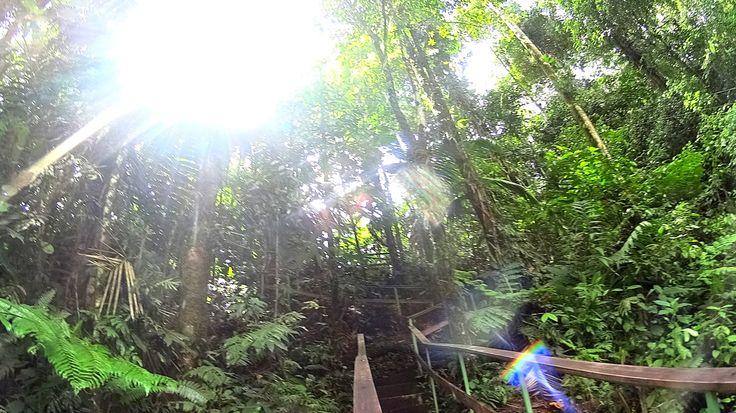 Stairway to heaven, Rainforest, Costa Rica, Stair, Zipline, Trees, Nature, Adventure.