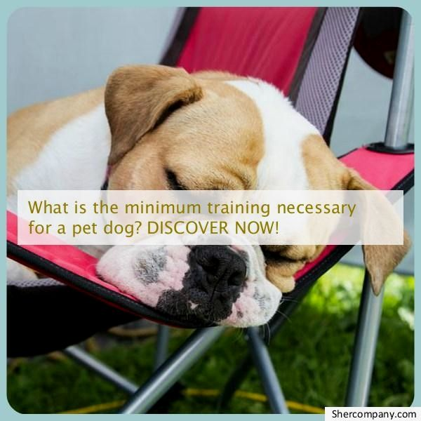 Dog Training Tricks Check Out The Picture For Many Dog Obedience