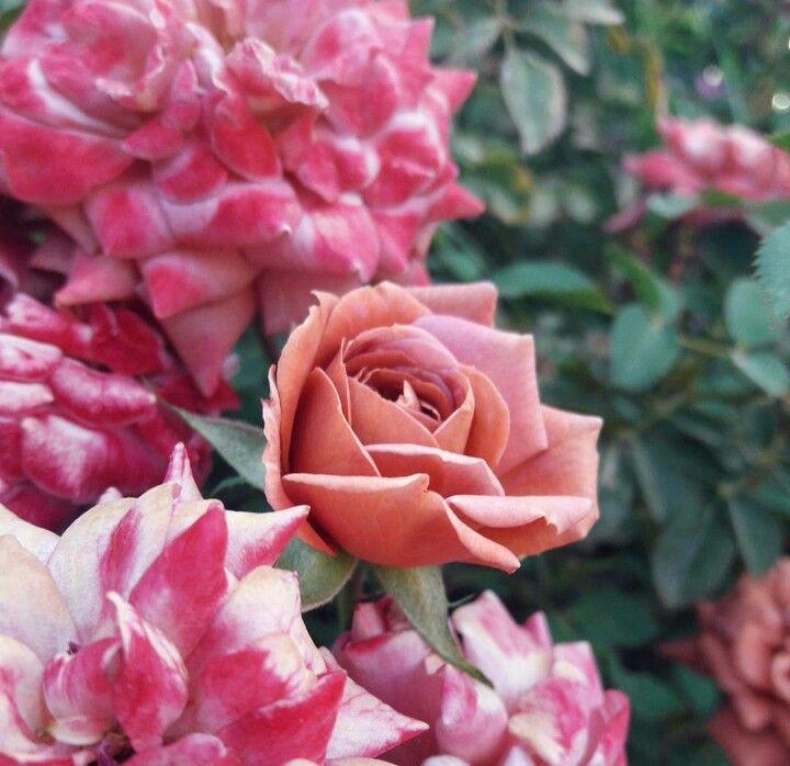 Rosas , Casa de la Abuela