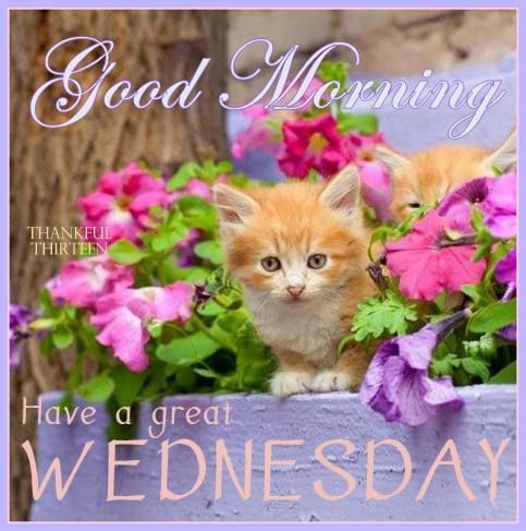 Good Morning Have A Great Wednesday Pictures, Photos, and Images for Facebook, Tumblr, Pinterest, and Twitter