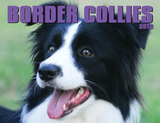 WOW! An amazing new weight loss product sponsored by Pinterest! It worked for me and I didnt even change my diet! Here is where I got it from cutsix.com - I Love Border Collies!