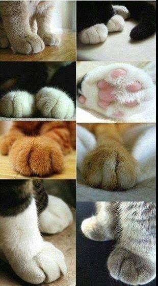 Zampe di Gatto
