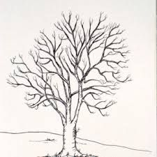 oak trees drawings - Google Search